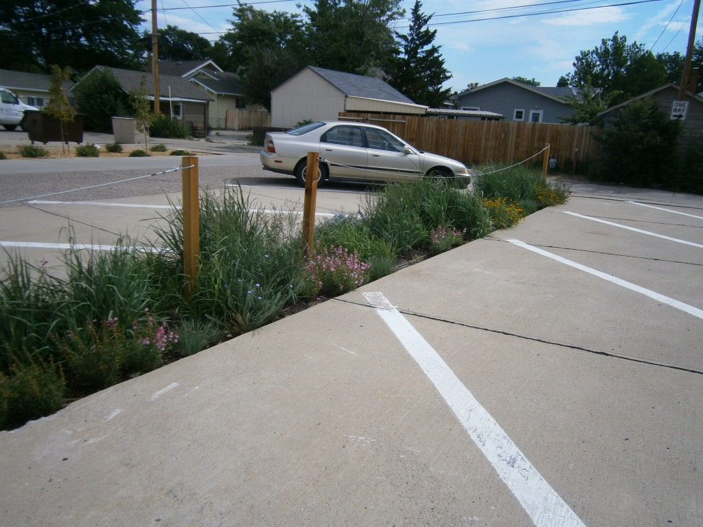 native grasses, sustainable landscaping