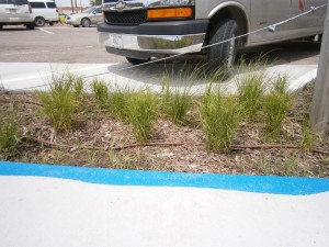 Native sedges are a great choice for areas with poor soil drainage